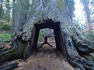 DE DODE TUNNEL TREE VAN DEZE GROVE :)